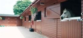 Строительство конюшни в загородном доме
