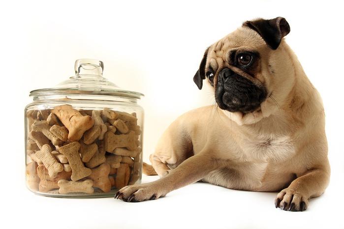 сухой-корм-для-собаки