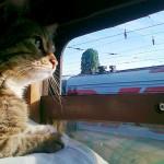 животное-в-поезде