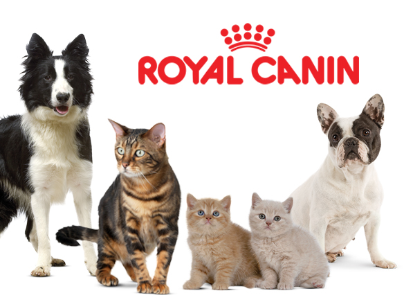 Реклама корм royal canin