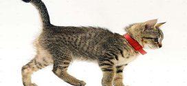 Как защитить кошку от блох
