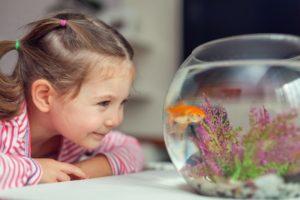 аквариум2