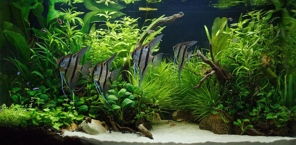 аквариум4