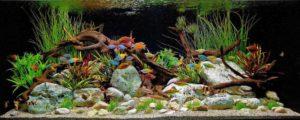 аквариум5